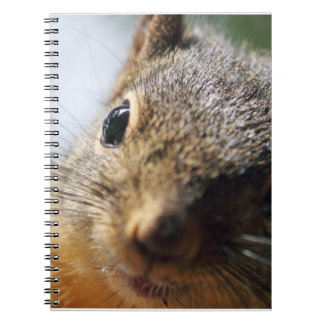 Imagen extrema de la ardilla del primer cuadernos