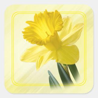 Imagen floral de la naturaleza del narciso del pegatina cuadrada