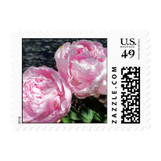 Imagen floreciente de la foto de la flor del Peony Sello