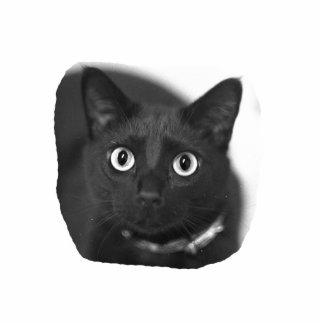 Imagen grande de BW de los ojos del gato gris Escultura Fotográfica