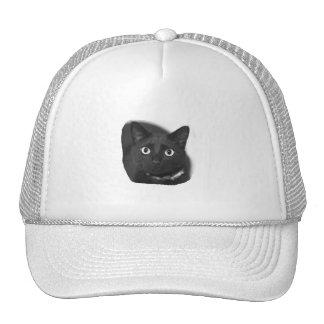 Imagen grande de BW de los ojos del gato gris Gorras