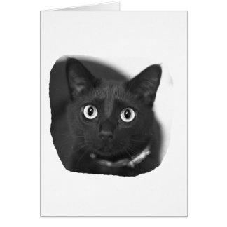 Imagen grande de BW de los ojos del gato gris Tarjeta Pequeña