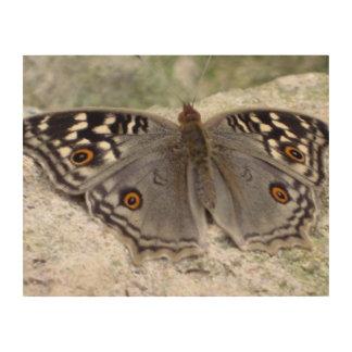 Imagen gris del color de la mariposa - lona de mad cuadros de madera