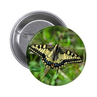 Imagen hermosa de la mariposa pins