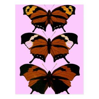 Imagen hermosa del modelo de mariposas postales