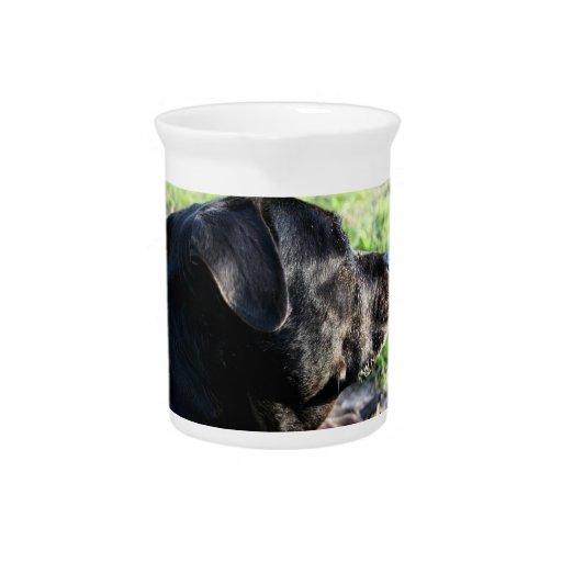 Imagen lejos dada vuelta cabeza negra del laborato jarra para bebida