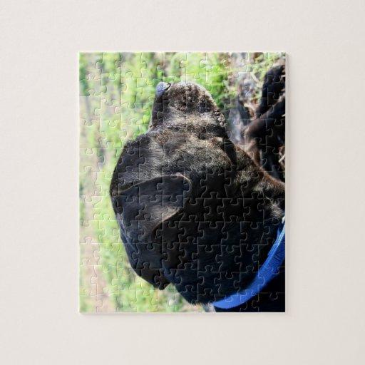 Imagen lejos dada vuelta cabeza negra del laborato puzzles con fotos