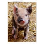 Imagen linda de un cerdo del bebé felicitacion