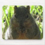 Imagen linda de una pequeña ardilla que come una n alfombrillas de ratón