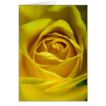 Imagen macra magnífica del rosa amarillo tarjeta de felicitación