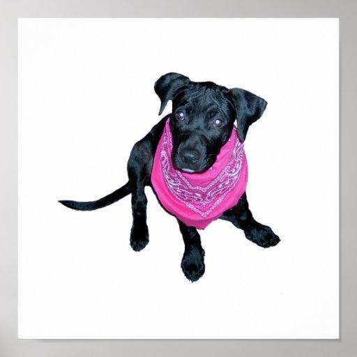 Imagen negra del perrito del pañuelo del rosa del  impresiones