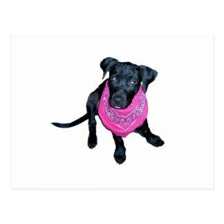 Imagen negra del perrito del pañuelo del rosa del postal