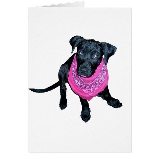 Imagen negra del perrito del pañuelo del rosa del  tarjeta de felicitación