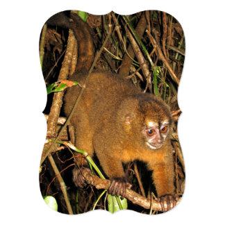 Imagen nocturna rara del mono de la noche