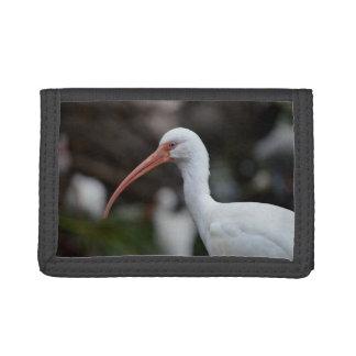 Imagen observada azul blanco de la pluma de pájaro