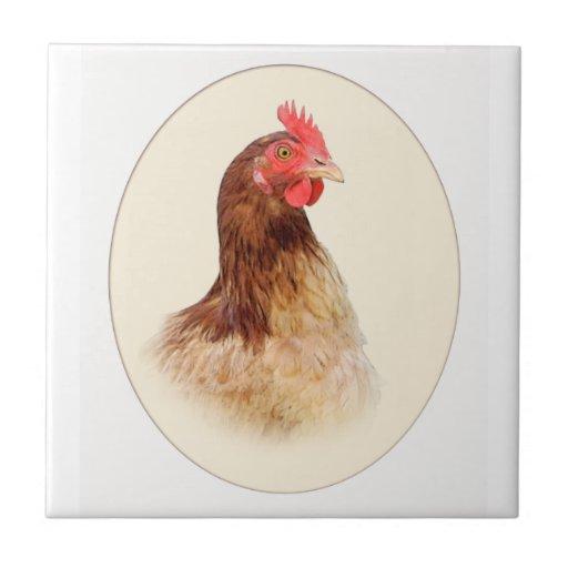 Imagen oval de la pequeña teja roja de la gallina