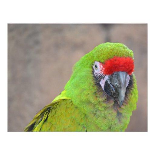 Imagen principal roja c del pájaro del loro verde tarjetas publicitarias