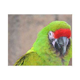 Imagen principal roja c del pájaro del loro verde impresion en lona