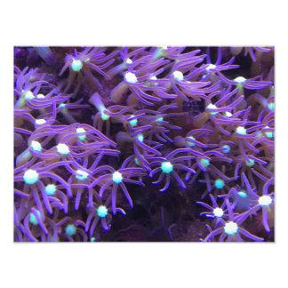 Imagen púrpura de la vida marina cojinete