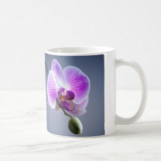 Imagen púrpura y blanca de la orquídea en la taza