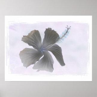 Imagen que frecuenta de una flor del hibisco posters