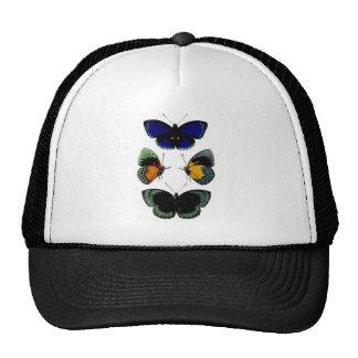 Imagen retra hermosa de las mariposas del vintage