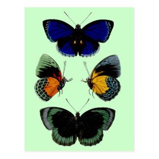 Imagen retra hermosa de las mariposas del vintage tarjetas postales