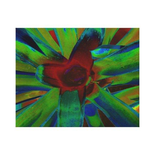 Imagen roja azulverde de la planta de Bromeliad Lienzo Envuelto Para Galerias