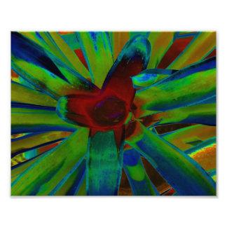 Imagen roja azulverde de la planta de Bromeliad Impresiones Fotograficas