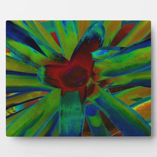 Imagen roja azulverde de la planta de Bromeliad Placas De Plastico