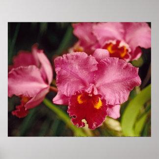 Imagen roja de la orquídea de polilla impresiones