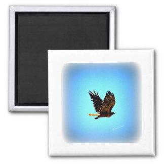 Imagen roja del halcón de la cola imán cuadrado