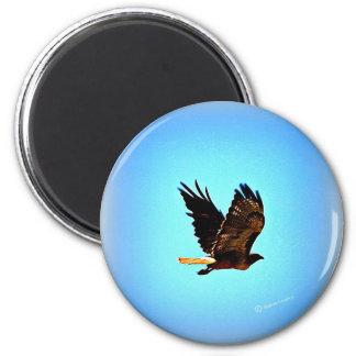 Imagen roja del halcón de la cola imán redondo 5 cm