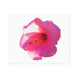 imagen rosada de la flor del hibisco impresiones en lona estiradas