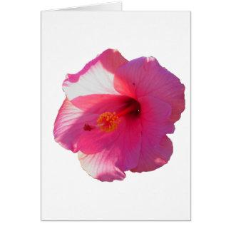 imagen rosada de la flor del hibisco tarjeta de felicitación