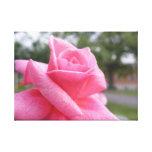 imagen rosada del rosa impresión en lona estirada