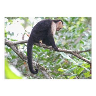 Imagen salvaje del mono