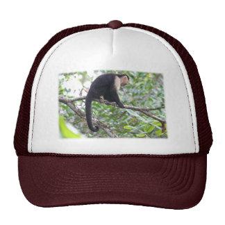 Imagen salvaje del mono gorra