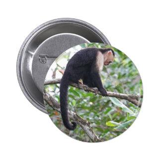 Imagen salvaje del mono pin