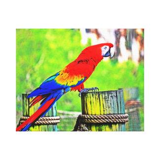 imagen saturada hdr del pájaro del macaw impresión de lienzo