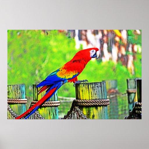 imagen saturada hdr del pájaro del macaw posters