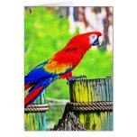 imagen saturada hdr del pájaro del macaw felicitaciones