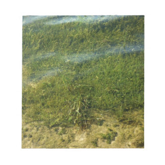 Imagen subacuática de la hierba de la charca libretas para notas