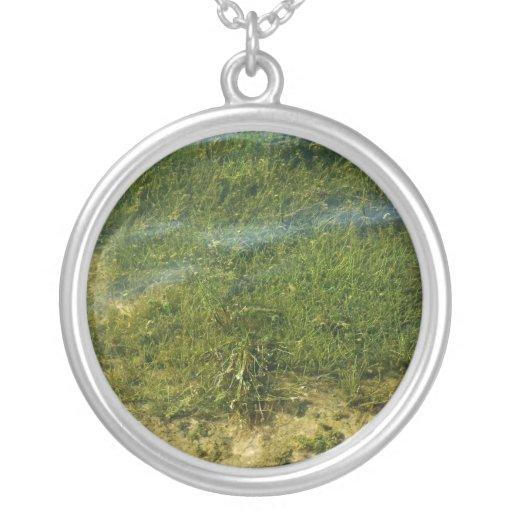 Imagen subacuática de la hierba de la charca colgantes