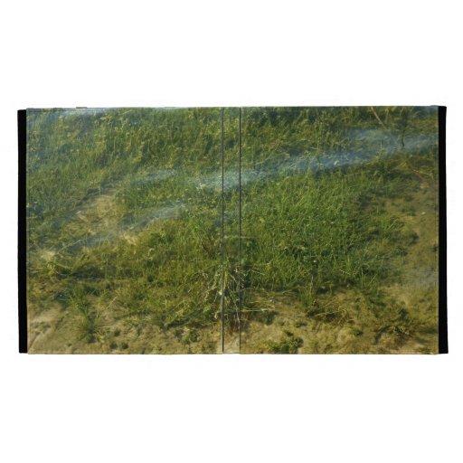 Imagen subacuática de la hierba de la charca