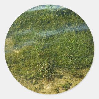 Imagen subacuática de la hierba de la charca pegatina redonda