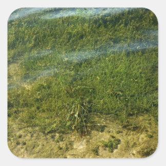 Imagen subacuática de la hierba de la charca pegatina cuadrada