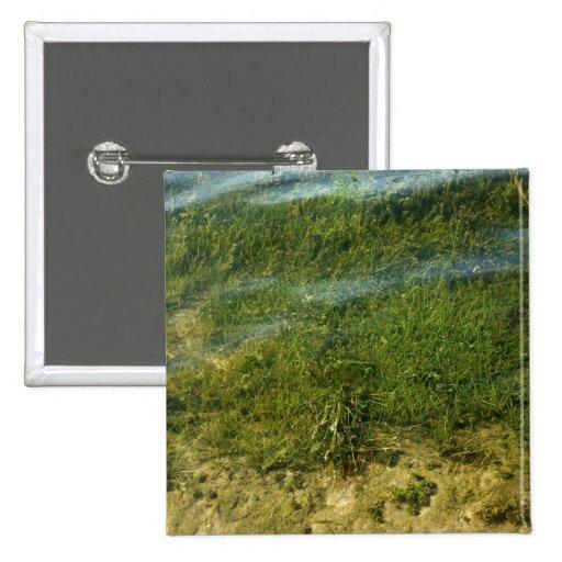 Imagen subacuática de la hierba de la charca pin