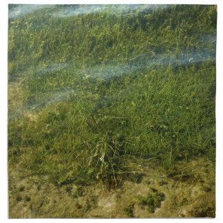 Imagen subacuática de la hierba de la charca servilletas de papel