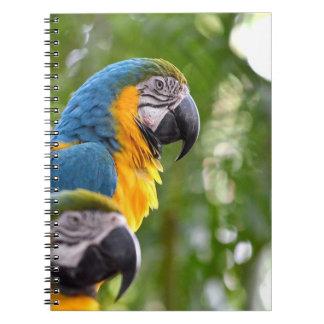 imagen trasera c jpg del pájaro del foco de dos ma libros de apuntes con espiral